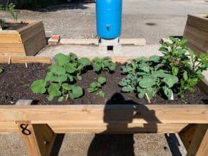 DNCAP's Accessible Community Gardens